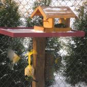 dokarmiajmy ptaszki
