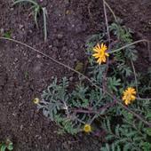 grudniowe kwiatki ...