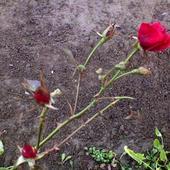 Grudniowy kwiatek !