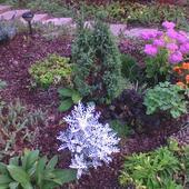 jesienny kawałek ogrodu