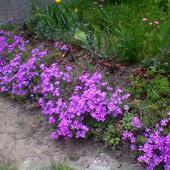 mini kącik kwiatowy