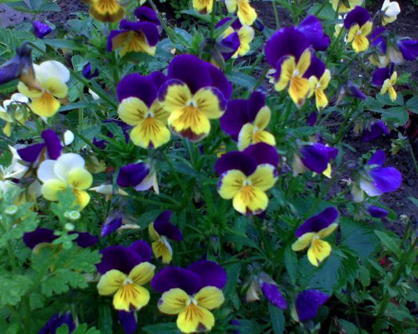 te kwiatki .........