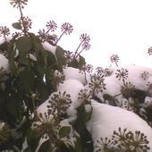 dużo śniegu napadało od samego rana ...