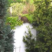 Kotek wśród zieleni.