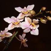 phal.philadelphia