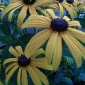 słoneczne kwiatki !