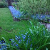 w malinowym ogródku ...