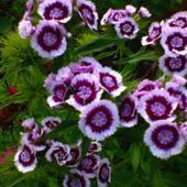 czerwcowe kwiaty ...