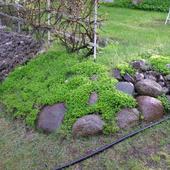Trochę zieleni ...............tej............zimy!!!!