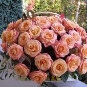 Trwała odmiana róz....stały w koszu przez 12 dni....mc pażdziernik 2008!!