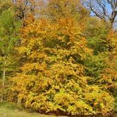 Wspomnienie jesieni.........