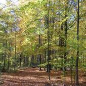 Wspomnienie jesieni.............