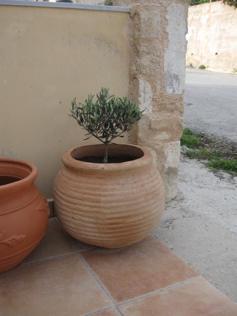 drzewko oliwkowe