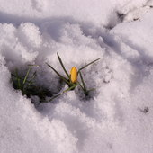 A Jednak Idzie Wiosn