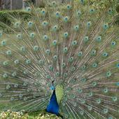 fauna Madery