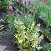 jeszcze kawałeczek ogródka