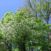 Już niedługo będzie wiosna
