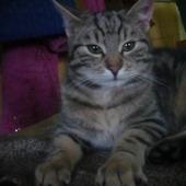 Mój kochany swirusek:)