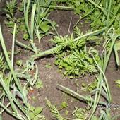 Poliagrokultura