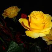 Róze dla Isi