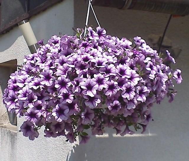 Piękne Kwiaty W Donicach