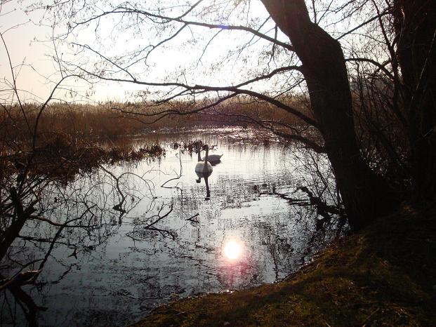 Słońce w wodzie
