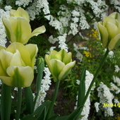 biało - zielone