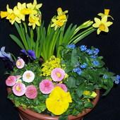 domowa kompozycja kwiatowa