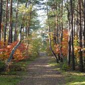 Las jesienią 2009r.