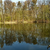 Las,woda,śpiew ptaków.