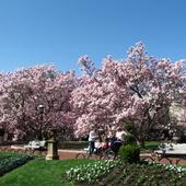 magnoliowy zakątek