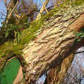 paproć na drzewie