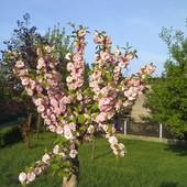 sliczne drzewko rosnące pod naszym blokiem
