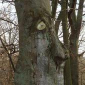 twarz drzewa