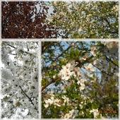 Wiosenne