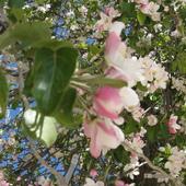 Wiosna w Maroku