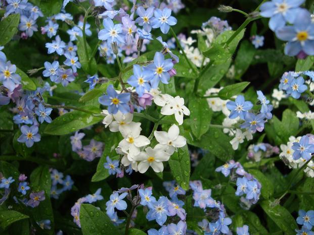niebieskie, białe i różowe