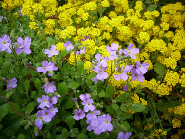radosne kwiatki,  na niepogodę