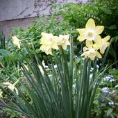 Jeszcze kwitną