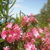 Na wyspie Korfu 2009