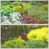 SROKa - też lubi ładne ogródki...