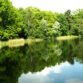 Nad jeziorem ...zielono...