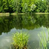 Nad jeziorem...zielono...
