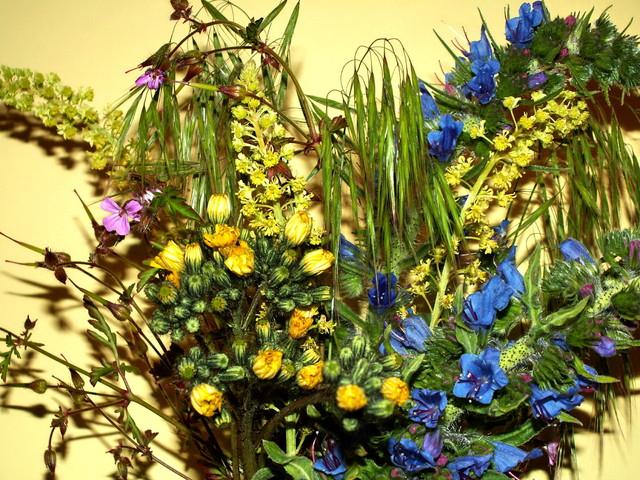 Bukiet polnych kwiatów.