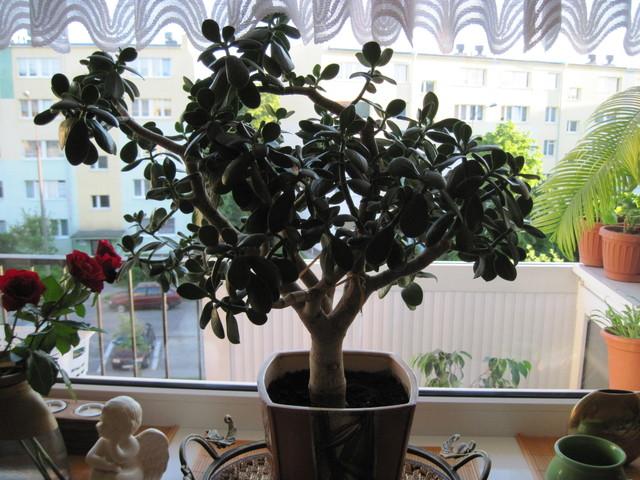 drzewko szczęścia
