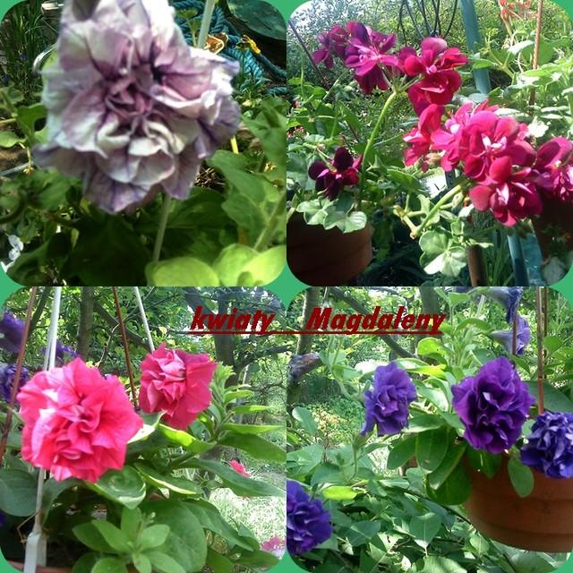 kwiaty Magdaleny