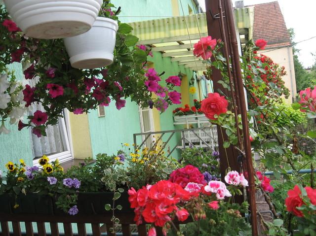 kwiaty na moim tarasie