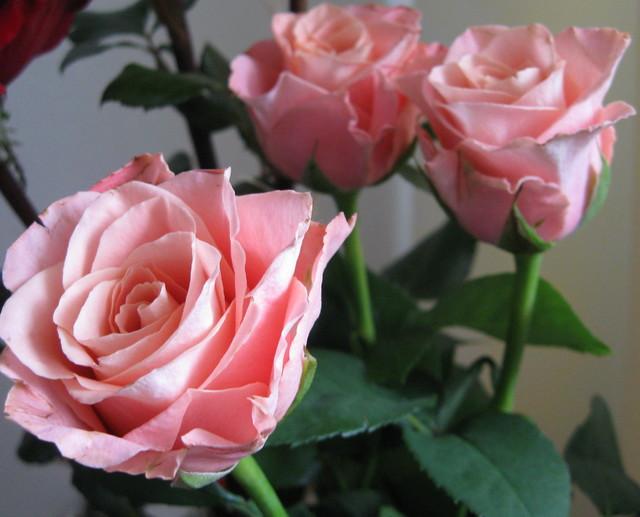 Różyczki dla Jolci, Beatki i Danusi...