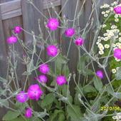 ciekawy kwiat