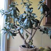 drzewko szczęścia 2